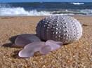 Mornington Sea Glass