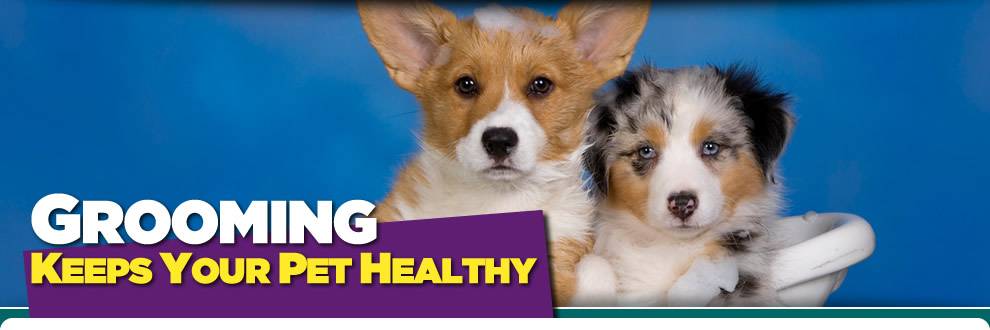 Grooming - Keeps your pet healthy